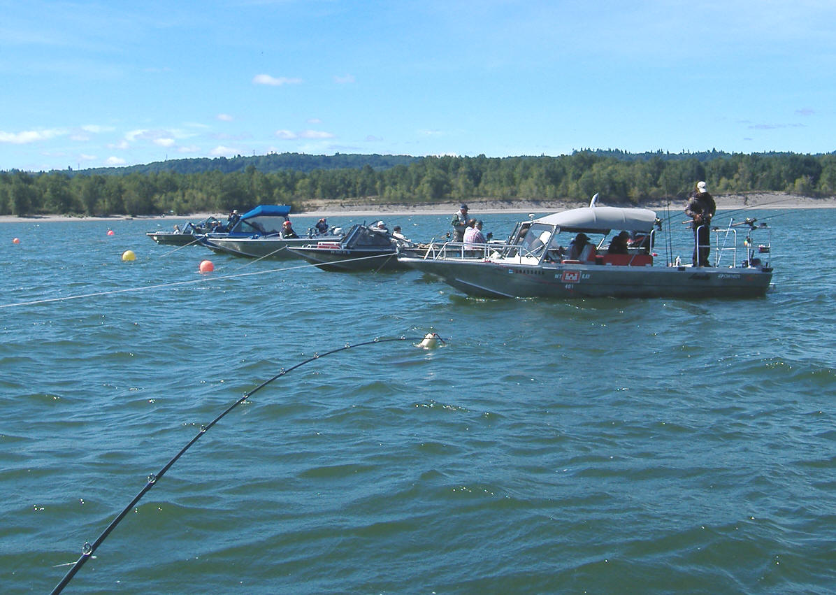 Lower columbia river hogline fall chinook fishing for Fishing columbia river